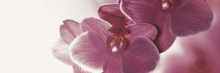 Abrila inserto kwiat B 20x60