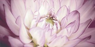 Sorenta inserto kwiaty B 30x60