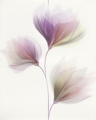 Loris white inserto flower 40x50