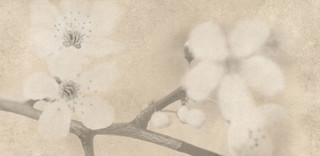 Early Pastels beige inserto flower 29x59,3